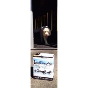 yukon lead dog